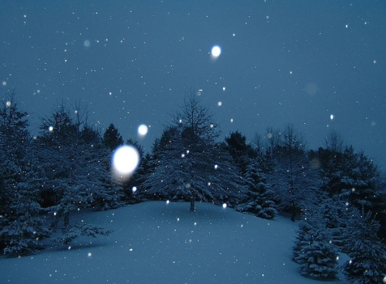 Blueish photo of snow and trees