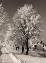Sepia snowy trees