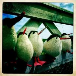 Kenny Taylor - Arctic Terns